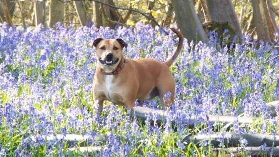 pet walking, sitting and dog hypnotherapy in kent