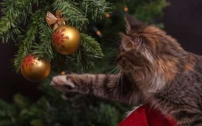 Preparing for Christmas and New Year: Your Vet Surgery is Shut!