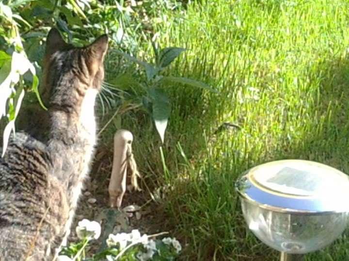 Cat In Grass Pets In Spirit Communication Ametrine Holistics
